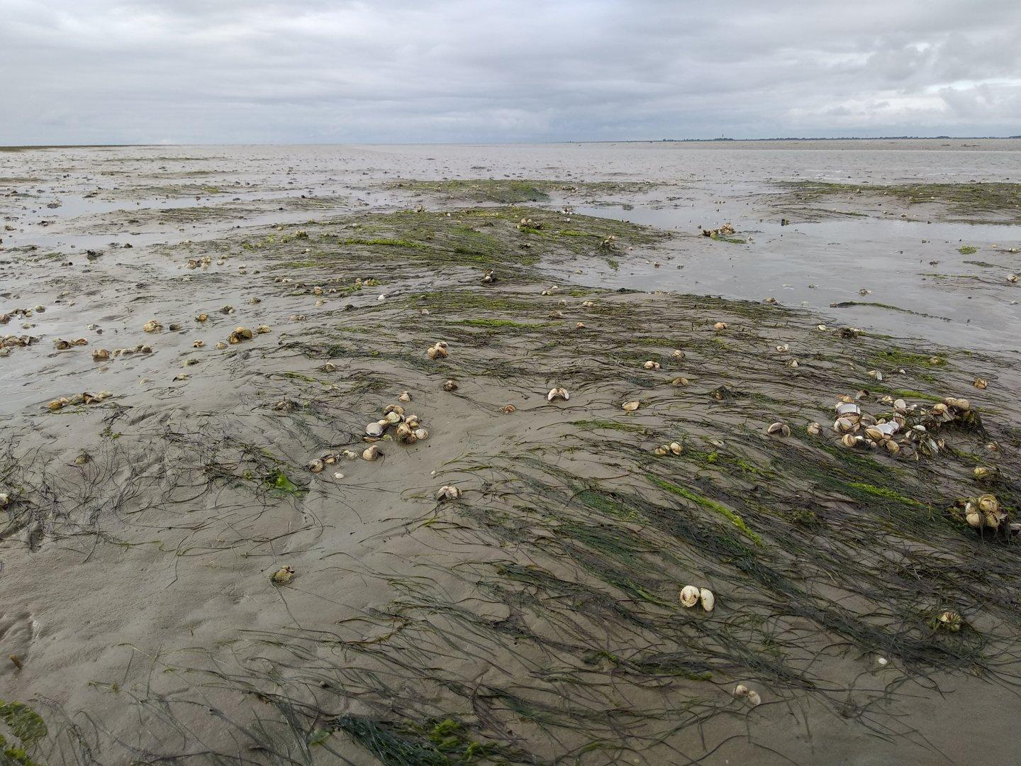A lot of mud and a bit of water, lots of shells and marine plants.